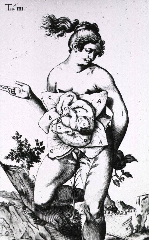 <p>Female figure with womb exposed displaying a fetus.</p>