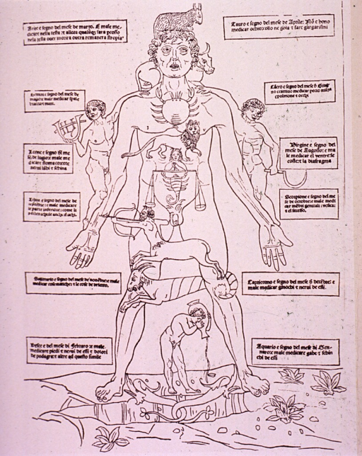 <p>Human figure with the parts of the body identified with signs of the zodiac.</p>