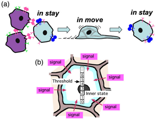 Concept of autonomous cell movement. (a) Each cell has two states, in stay and in move, for cell movement. A cell in stay is activated by signals from different cell type, and begins to move, changing its state into in move-state. The cell in move continues to move for short periods and then ceases from moving and returns to in stay. (b) Idea of activation mechanism: The signals from different cell types increase an inner state of a cell in stay. If the inner state of the cell exceeds a threshold, the cell in stay is activated and becomes in move-state.