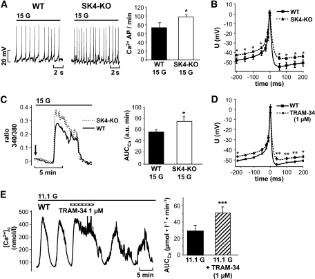 Genetic ablation or pharmacologic inhibition of SK4 channels influences electrical activity and [Ca2+]c of pancreatic β-cells. A: In the presence of 15 mmol/l glucose, action potential frequency was increased in SK4-KO β-cells compared with WT controls. Data are given as means ± SEM of 18 WT and 53 SK4-KO β-cells tested. B and D: Analysis of single Ca2+ action potentials in SK4-KO and WT β-cells. SK4 deficiency or blockage with the SK4 channel inhibitor TRAM-34 (1 μmol/l) resulted in action potential broadening and depolarized the plateau potential from which action potentials started. In the series with TRAM-34, the shape of action potentials before drug application was compared with action potentials 3–4 min after addition of TRAM-34. The traces were compiled by averaging action potentials of 11 experiments with SK4-KO and 12 experiments with WT β-cells. The series with TRAM-34 results from five independent experiments. C: SK4-KO β-cells stimulated with 15 mmol/l glucose display an augmented Ca2+ response compared with WT β-cells. The figure shows an overlay of two representative traces of the first increase in [Ca2+]c induced by switching glucose from 0.5 to 15 mmol/l (arrow). A total of 31 SK4-KO and 26 WT β-cells were analyzed. The values for AUCCa ± SEM of this series of experiments are summarized in the diagram. E: Blocking SK4 channels elevates [Ca2+]c in WT β-cells. β-Cells exposed to 11.1 mmol/l glucose show regular oscillations of [Ca2+]c. Addition of TRAM-34 (1 μmol/l) increased [Ca2+]c and altered the pattern of oscillations. The experiment is representative of five with similar results. The diagram summarizes the increase in the AUCCa analyzed for a time period of 4 min in the presence of TRAM-34 compared with control conditions. *P ≤ 0.05, **P < 0.001, ***P ≤ 0.001.