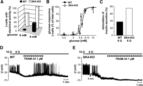Glucose responsiveness of SK4-KO β-cells is shifted to lower glucose concentrations. A: β-Cells were stimulated with either 6 or 8 mmol/l glucose, respectively. The diagram illustrates the fraction of cells showing Ca2+ action potentials in response to the indicated glucose concentration. In this series of experiments, 12 WT and 15 SK4-KO β-cells were tested. B: The concentration-response curve was determined by perifusing isolated β-cells with different glucose concentrations. Cells in which [Ca2+]c increased or displayed oscillations within 15 min of perifusion were regarded as glucose responsive. The number of cells tested with each glucose concentration was as follows (WT/SK4-KO): 0.5 mmol/l glucose, 49 WT/55 SK4-KO cells; 3 mmol/l glucose, 46/51; 5 mmol/l glucose, 49/54; 6 mmol/l glucose, 74/73; 8 mmol/l glucose, 56/68; 15 mmol/l glucose, 16/36. The cells were obtained from preparations of three to nine animals per condition. To avoid overlapping, the data points for WT and SK4-KO β-cells are shifted to left and right within the graph. C: Insulin secretion was compared in islets incubated with 3 or 6 mmol/l glucose (6 G) for 1 h. The diagram shows the percentage of islet preparations with significant increase in insulin release by 6 mmol/l glucose (eight independent preparations for each genotype). D and E: TRAM-34 induces electrical activity in WT β-cells treated with substimulatory glucose concentrations but not in SK4-KO β-cells. In this series of experiments, glucose concentration was lowered from 10 to 6 mmol/l or 5 mmol/l glucose. After termination of electrical activity, TRAM-34 (1 μmol/l) was added and action potentials reoccurred in four of five WT cells tested. In SK4-KO β-cells, TRAM-34 was without depolarizing effect. The experiment is representative of three.