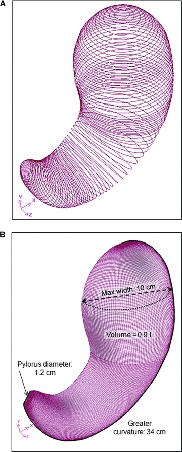 Construction of a 3-D model of the average human stomach. (A) Series of circles used to develop the 3D geometry of the stomach model. (B) Isometric view of the final geometrical model.