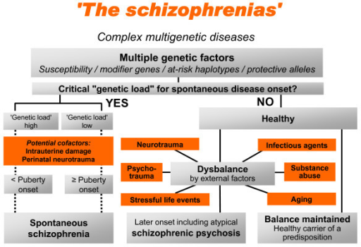 theory of biological causes of schizophrenia Causes the exact causes of schizophrenia are unknown research suggests a combination of physical, genetic, psychological and environmental factors can make a person more likely to develop the condition.