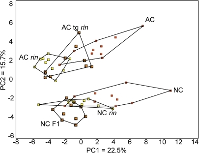 Principal component analysis (PCA) of metabolic profiles of whole tomato fruit.Six tomato genotypes from two genetic backgrounds were analyzed by PCA using 46 NMR-profiled metabolites. Within each background (AC, an heirloom variety; NC, modern production varieties), variation existed at the Rin locus such that one fully ripening type (red squares), one partially ripening type (orange diamonds), and one non-ripening type (yellow circles) existed. Ten individual fruits were profiled per genotype.