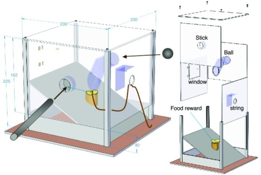 Figure 1. Multi Access Box (MAB) (as in PLoS ONE,13 Copyright 2011 by the Public Library of Science. Reprinted with permission of the author). A food reward presented in the center of a transparent box can be retrieved by one of four possible methods, which are built in the four walls of the MAB: opening a window, pulling a string, inserting a ball or inserting as stick tool. The walls can be replaced with blocked non-functional versions.