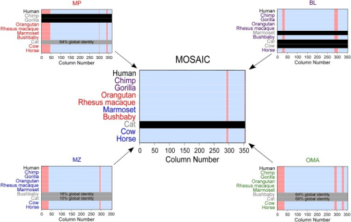 Illustration of integration process for carbonic anhydrase 12. MSA columns that are aligned to below 95% confidence are displayed in red. Orthologs that were not returned for a given species are denoted with a horizontal black bar. Those that were filtered using pre-integration sequence identity cutoffs are indicated with gray bars with the global percent identity from pairwise alignment to human included. Species name label colors denote the species of origin for orthologs in the MOSAIC alignment.