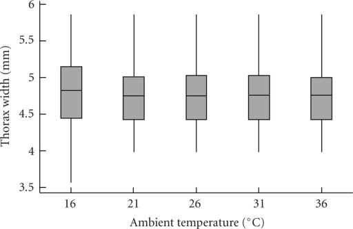 Bees of a wide range of body sizes were found to forage at all ambient air temperatures. Data are pooled here for both colonies; shown are medians (lines), quartiles (boxes), and ranges (whiskers) (n = 70 bees for 16°, n = 65 for 21°, n = 67 for 26°, n = 71 for 31°, n = 73 for 36°).