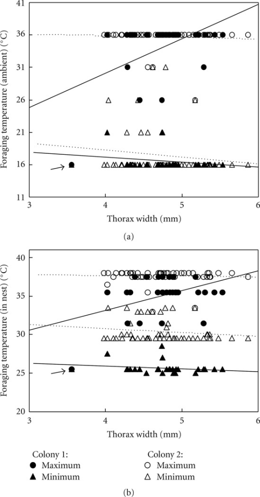 Foragers of different body sizes did not significantly differ in the average temperatures at which they foraged (although linear fits are shown, slopes are not significantly different from zero). However, colonies differed significantly from each other. Shown are (a) ambient temperature and (b) temperature measured in nest; each data point is the average temperature across all days on which that bee foraged (each bee foraged on average on 13.9 days), and in total, 81 bees are shown.