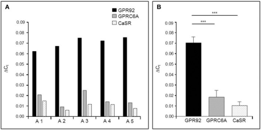 Quantitative PCR (qPCR) analysis of mRNA for the receptor types GPR92, GPRC6A, and CaSR in the murine gastric antrum from normal fed mice. (A) The relative expression levels of the three receptor types in the antral mucosa from five different mice. In all cases the results indicate the highest expression rates for the peptone-receptor GPR92.(B) Mean transcript levels of GPR92, GPRC6A and CaSR from A1-A5 shown in (A). The values for GPR92 are 4.6-fold higher than those for GPRC6A (P = 0.004) and 8.1-fold higher than for CaSR (P = 0.0003). Ribosomal protein L8 (RpL8) was used as an internal control. Relative expression was calculated using the formula: ΔCt = ECt(target)−Ct(reference) with corresponding efficiencies (EGPR92: 1.988, EGPRC6A: 1.967 and ECaSR: 1.965). Data are generated in triplicate are expressed as mean ± SD with n = 5 mice. Statistically significant results determined by the unpaired t-test (***P = 0.001).