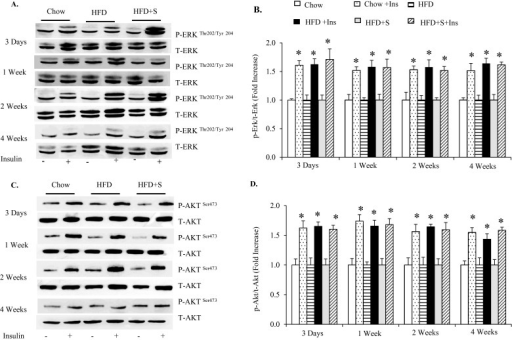 Effects of HFD ± sodium salicylate on skeletal muscle insulin signalling(A) Akt phosphorylation; (B) ERK1/2 phosphorylation. Compared with respective control without insulin, *P<0.05. n = 3.