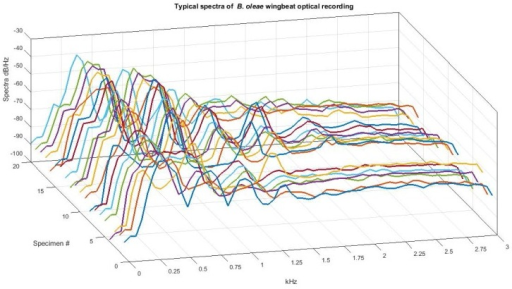 Spectra of 20 different cases of B. oleae optoacoustic, in-flight recordings.