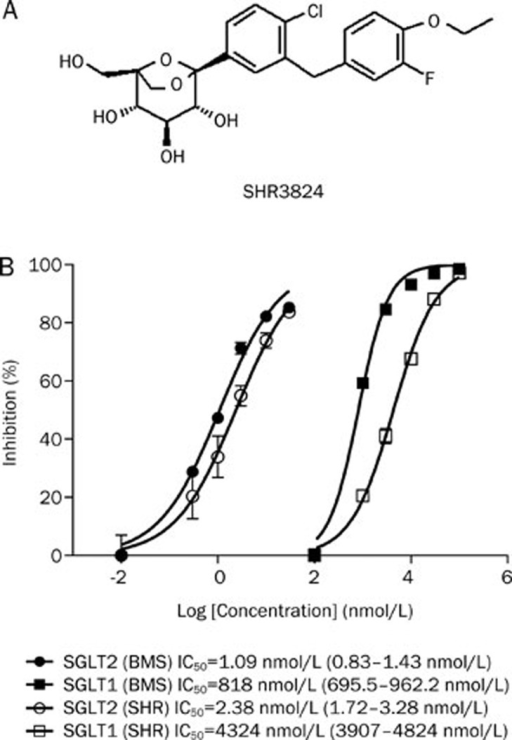 The chemical structure of SHR3824 (A) and in vitro inhibition of human SGLT2 and SGLT1 by SHR3824 and BMS512148 (B). Data are presented as the mean of two experiments. SGLT1 or SGLT2 expression plasmids were transfected into HEK293 cells. An AMG uptake experiment was performed using transiently transfected cells, and the 95% confidence limits of the IC50 values for each SGLT were calculated.