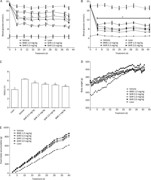 The anti-diabetic effects of chronic SHR3824 treatment on random blood glucose levels (A), fasting blood glucose levels (B), HbA1c (C), body weight (D) and food intake (E) in GK rats. SHR3824, BMS512148 or vehicle was orally administered to GK rats once daily for 41 d. HbA1c levels were measured on treatment d 38. Fasting blood glucose levels, random blood glucose levels, body weight and food consumption were measured at fixed time intervals. bP<0.05, cP<0.01 vs control. The data represent the mean±SEM. n=12.
