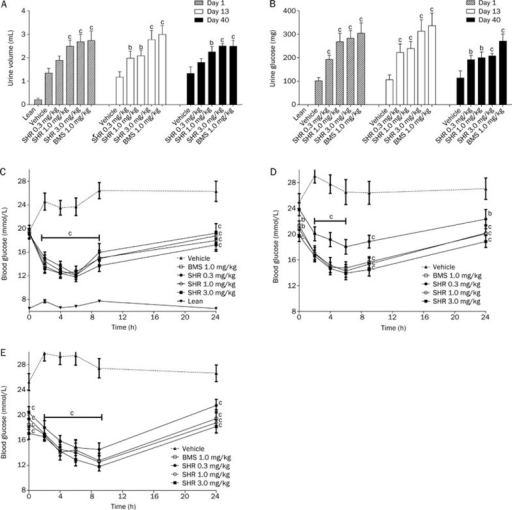 The effects of SHR3824 on urinary glucose excretion and blood glucose levels after acute and multiple dosing in db/db mice. SHR3824, BMS512148, or vehicle was orally administered to db/db mice once daily for 43 d. The urine volume (A) and urinary glucose excretion (B) were measured 0–6 h after treatment on d 1, 13, and 40. The blood glucose levels were determined on treatment d 1 (C), 13 (D), and 40 (E). bP<0.05, cP<0.01 vs control. The data represent the mean±SEM. n=12.