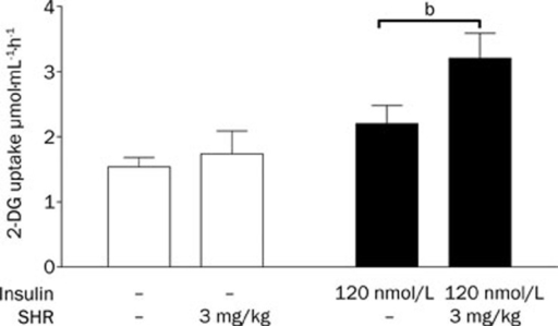 The effects of chronic SHR3824 treatment on glucose uptake in the soleus muscles of db/db mice. Mice were treated with SHR3824 (3.0 mg/kg) or vehicle for 43 d. The soleus muscles were isolated and 2-deoxyglucose uptake was measured at the end of the treatment. bP<0.05, cP<0.01 vs control. The data represent the mean±SEM. n=12.