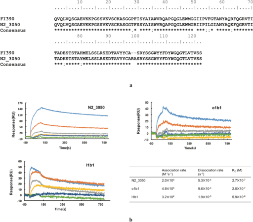 Identification of broadly neutralizing antibody (bnAb) and H7N9 specific antibody in Ig repertoires of H7N9 infected patients.(a) Alignment of previously reported bnAb sequence (FI390) and the antibody sequence found in H7N9 patient. FI390 was as a bnAb against influenza virus reported by Pappas L. N2_3050 was the IGH sequence found in two recovered H7N9 patients with identical CDR3 amino acid sequence as FI390. Alignment was performed using Clustal W2. (b) Binding kinetics of scFvs N2_3050, o1b1 and l1b1 to H7N9 HA antigen using Surface Plasmon Resonance assays. Different concentrations (10 uM, 2 uM, 400 nM, 200 nM, 100 nM and 50 nM for N2_3050 and c1b1; 1 uM, 500 nM, 250 nM, 125 nM, 62.5 nM and 31.5 nM for l1b1, respectively) is used in the test. Calculated KD values are shown in the table presenting binding affinity of each scFvs.