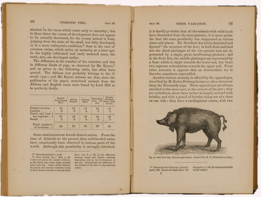<p>Image of p. 96-97 from Darwin's Variation of animals and plants under domestication. Contains an illustration of a domestic pig showing unique jaw appendages.</p>