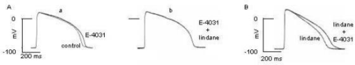 Effects of E-4031 (1 microM) and lindane (3.4 microM) on the action potential (AP). Superimposed traces of the AP recorded on frog auricle using intracellular microelectrodes. A. a): AP recorded before and after addition of E-4031 to the Ringer solution; b) further addition of lindane to the solution containing E-4031. B). AP recorded in the Ringer solution containing lindane before and after further addition of E-4031.