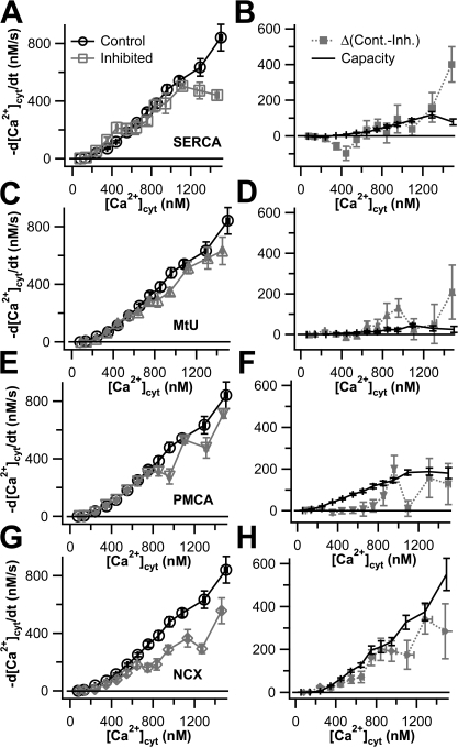 Most Ca2+ transporters work at or near capacity in undifferentiated PC12 cells. In each panel of the left column (A, C, E, and G), Ca2+ transport curves from various 1-blocked experiments are shown in gray, and control Ca2+ transport curves from Fig. 1 (−d[Ca2+]cyt/dt vs. [Ca2+]cyt) are shown in black. In each panel in the right column (B, D, F, and H), the activity of a given transporter, calculated as the difference between the control Ca2+ transport curve and the 1-blocked Ca2+ transport curve to the left, is shown in gray. The capacity trace obtained from the 3-blocked experiments of Fig. 2 is shown in black. (A and B) SERCA was inhibited with 1 μM TG (n = 12). (C and D) MtU was inhibited by treatment with 2 μM CCCP (n = 16). (E and F) PMCA was inhibited by raising extracellular pH to 9.0 (n = 16). (G and H) NCX was inhibited by replacing extracellular Na+ with Li+ (n = 16).