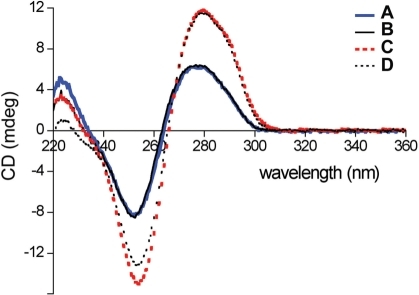 CD spectra of DNA duplexes. (Curve A) Fully natural and correctly paired duplex (N4:N23 = dT:dA, X7:Y20 = dA:dT); (curve B) Fully natural duplex containing a single mispair (N4:N23 = dT:dC, X7:Y20 = dA:dT); (curve C) Duplex containing a d34DMPy self pair and no mispairs (N4:N23 = dT:dA, X7:Y20 = d34DMPy:d34DMPy) and (curve D) Duplex containing a d34DMPy self pair and a single mispair (N4:N23 = dT:dC, X7:Y20 = d34DMPy:d34DMPy).