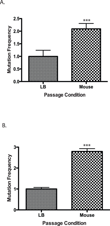Mutation frequency of culture vs. mouse passaged wild type V. cholerae.Wild type cells were grown in LB or passaged through a mouse and plated on (A) rifampicin or (B) trimethopirin to determine the number of resistant colonies. The results show the average mutation frequency of V. cholerae from 5 mice relative to the average mutation frequency from 5 LB grown cultures. The average mutation frequency of the LB grown V. cholerae cultures was normalized to 1. The error bars reflect the SEM from at least 3 independent experiments (*** p<0.001).
