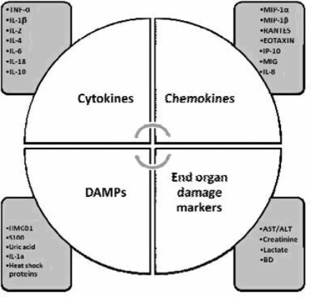 The spectrum of cytokines, chemokines, and DAMPs in T/HS and TBI. The inflammatory response generated in response to T/HS or TBI can be assessed by measuring a panoply of cytokines, chemokines, DAMPs, and ultimate markers of endorgan damage. Some of these biomarkers may also be candidates for therapeutic intervention.