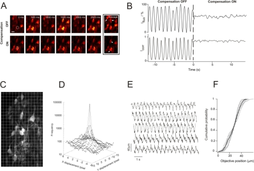 Movement compensation efficiency under in vivo conditions.(A) Imaging sequence sampled from a movie recorded at 30 fps of in vivo spinal lamina I neurons labelled with a structural dye (Calcein). Each image represents the mean of 5 consecutive raw images, reducing the actual sampling rate to 6 fps. Upper and lower rows were respectively acquired when the compensation was OFF and ON. When it is OFF, the time-stack projection (Average) results in an image containing information from planes situated above and below the plane of interest (arrows). When it is ON, the time-stack projection results in an image containing information only from the plane of interest, yielding a highly contrasted image (arrow heads). Scale bar, 10 µm. (B upper graph) Normalized fluorescence intensity time course plotted for one cell in the field of view presented in (a) (dashed ROI) with the system OFF (large intensity fluctuations) and then ON (fluctuations reduced to less than 8% of the initial amplitude). (B lower graph) Portion of the time profile of a cross correlation index Icorr computed between the first image of Video S1 and each of the following images throughout the entire movie. The presented 25 sec portion is centered around zero, time point where the movement compensation device is turned ON. The ratio of Icorr standard deviations with and without movement compensation (92% in this example) was used as a measure of the efficiency of movement compensation in in vivo conditions. (C) Extended field of view from which the frames in A are taken. This image is the first frame of the Video S1 (sequence with movement compensation ON). Each frame was divided into a 14×25 grid (each grid element is 13×24 pixels) to perform cross-correlation analysis of pairs of successive images throughout the entire movie. (D) Logarithmic plot of the displacement vector distribution across the image: 70% of the vectors are  while 95% are <2.5 µm. (E) Examples of 5 typical traces of objective movement during compensation. (F) Cumulative probability plot of the objective positions across each of the represented traces (individual traces in grey, average trace in black). The mean objective displacement (5–95%) was 32±6 µm.