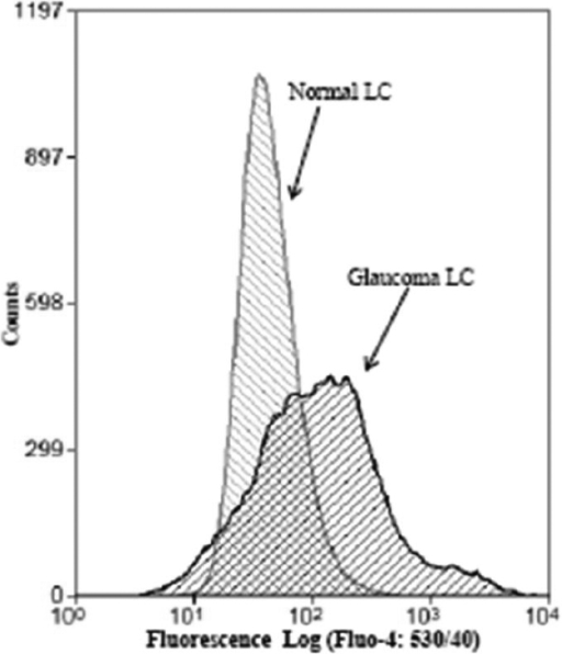 GLC cells show elevated cytosolic Ca2+. Flow cytometry was performed in Fluo-4/AM loaded NLC and GLC cultures. LC cells were contained in 1 ml isotonic Ca2+ free solution and the fluorescence intensity was measured. Addition of 2 mM extracellular Ca2+ induced a rise of cytosolic Ca2+ in both NLC and GLC and this response was is more intense and has greater variability in the GLC cells than in normal control LC cells. Results shown are tracings of a typical experiment with similar results observed in 3 separate experiments.