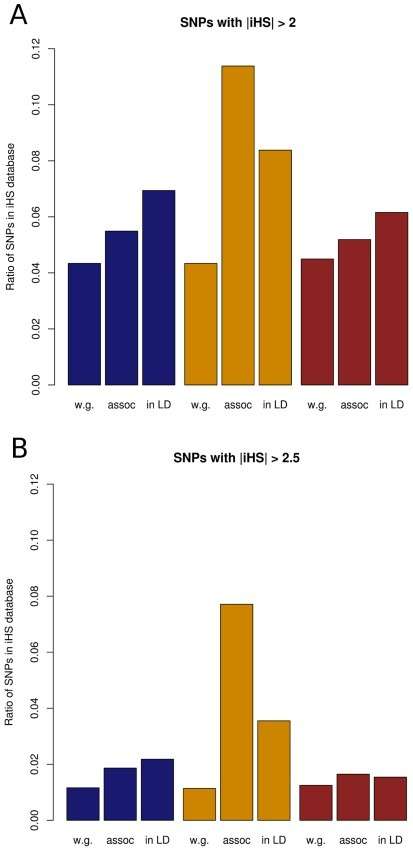 iHS signal percentages for Crohn's disease in the three HapMap populations.Amounts of (A) iHS signals and (B) strong iHS signals are given as percentages out of all SNPs genome-wide (w.g.), SNPs associated with Crohn's disease (assoc) or all SNPs in linkage disequilibrium of associated SNPs at r2 > 0.8 (in LD) for the three HapMap populations (Blue: CEU, yellow: ASN, brown: YRI).