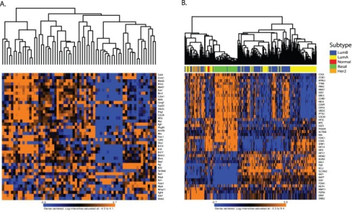 PAM50 clustering.A) NZB cross samples after unsupervised hierarchical clustered using the mouse orthologs of the PAM50 signature. B) The human breast cancer U133A gene expression data set after PAM50 subtype clustering using the Genefu R subtyping algorithm. Subtype classifications are indicated along the top of the heatmap.