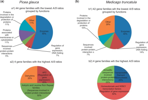 Functions of the protein families encompassing 10 members or more in Picea glauca (a) and Medicago truncatula (b) and associated with the lowest (a1; b1) or highest (a2; b2) A/S ratios (gene set enrichment analysis, Fisher's exact test, two-tailed, P < 0.05).