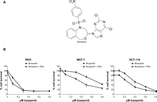 Cytotoxic effect of bozepinib and combined bozepinib/IFNα therapy. (A) Chemical structure of bozepinib. (B) MCF-7, HCT-116, and RKO cell lines treated with increasing amounts of bozepinib alone (circle) or in combination with 50 IU/mL IFNα (square) for 6 days as described in the Materials and methods section. Cell lines have been defined in material and methods section. The curve for cell survival is represented as a percentage compared to mock-treated cells. Values shown represent the mean of triplicate determinations calculated from a single experiment. Experiments were repeated at least three times.Abbreviation: IFNα, interferon-alpha.