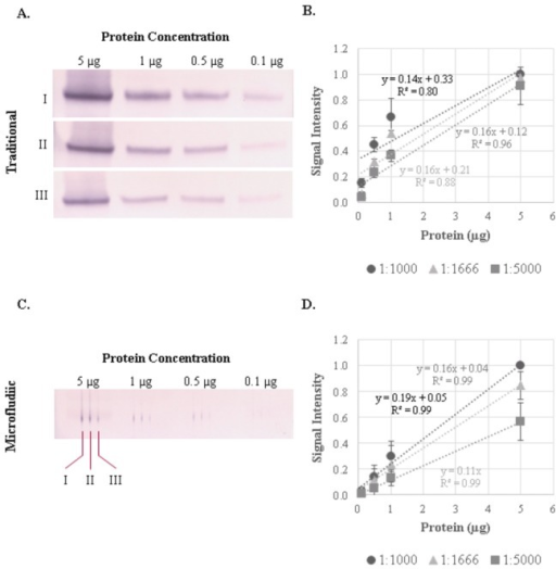 Comparison of traditional and microfluidic immunoblotting in human blood monocyte samples.Representative immunoblots for RelA/p65 at four protein concentrations (5, 1, 0.5 and 0.1 µg) and three antibody dilutions (I: 1:1000; II: 1:1666; III: 1:5000) using (A) traditional and (B) microfluidic immunoblotting techniques. The signal intensity for the (C) traditional and (D) microfluidic blots were quantified using ImageJ software and normalized to the signal associated with 5 µg of protein probed with the 1:1000 p65 antibody dilution. Immunoblots are representative of three independent PVDF membranes from the same PBMC lysates.