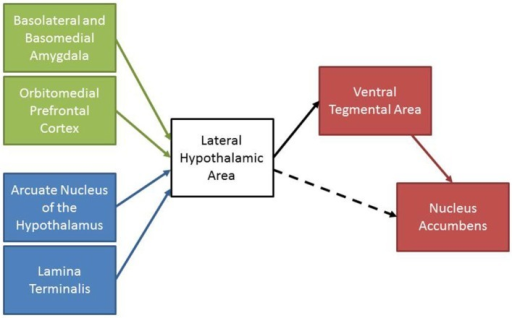 A schematic summary of the reviewed experiments. Areas involved in associative learning (green) and maintaining homeostasis (blue) project to the LHA. The LHA sends projections to motivation and reward areas (red) to initiate motivated behaviors. The LHA also sends projections to the nucleus accumbens that may promote motivated behaviors (dashed line).