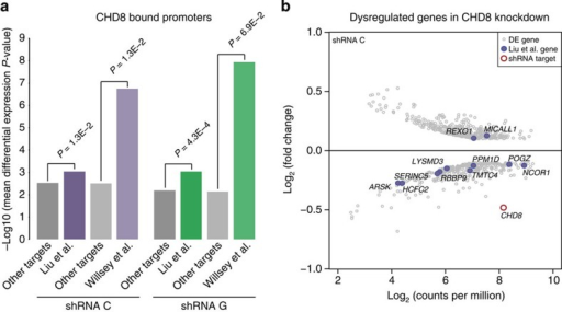 Depletion of CHD8 in hNSCs significantly affects ASD risk genes.(a) Mean differential expression P values for ASD risk genes from Liu et al. or Willsey et al. bound by CHD8 versus other genes bound by CHD8 but not in the respective ASD risk gene list. The significance of differences between mean differential expression P-values across gene sets was assessed using Wilcoxon rank tests. Note that CHD8 targets in Liu et al. are significantly dysregulated compared with other CHD8 targets in both knockdowns, whereas CHD8 targets in Willsey et al. are significantly dysregulated compared with other targets only in knockdown C. (b) Scatterplot of log2 fold change gene expression values and log2 read counts per million (CPM) for genes strongly dysregulated in hNSCs transfected with shRNA target C, as compared with scrambled control (EdgeR Poisson P value<1.68 × 10−6 and absolute log2 fold change>0.1, and log2(CPM) between 2 and 10). CHD8 is indicated by a red circle. ASD risk genes from Liu et al. are indicated by purple dots.