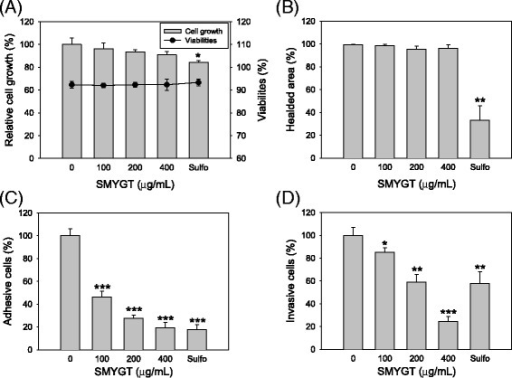Effects of SMYGT on the HUVEC-mediated angiogenic process in vitro. (A) HUVECs were cultured in the presence and absence of SMYGT for 24 h and measured using an automatic cell counter to determine cell growth and viability. (B) Scratches were applied to the lawn of HUVECs, and then cells were cultured in the presence or absence of SMYGT. After 12 h, the relative cell motility was determined by analyzing digital images. (C) HUVECs were resuspended in culture medium containing various concentrations of SMYGT and then inoculated in culture plates that were pre-coated with Matrigel. After 2 h, the adherent cells were fixed, stained, and then counted under a microscope. (D) Serum-starved HUVECs were inoculated into the cell culture inserts pre-coated with Matrigel and then cultured in the presence or absence of SMYGT. After 16 h, chemotactic HUVECs that invaded through the Matrigel were stained and counted under a microscope. Sulforaphane (Sulfo) was included in these assays for a positive control drug. All data, except viability, are presented as the relative means ± S.D. of triplicate experiments compared to the vehicle treatment group. *P < 0.05, **P < 0.01, ***P < 0.001.