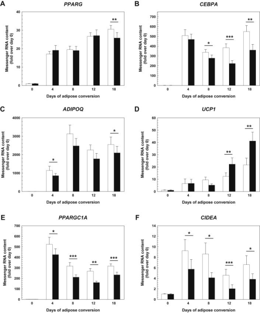 FGF21 effects on white and brown adipocyte marker gene expression in differentiating hasc preadipocytes The mRNA expression of PPARG encoding PPAR-γ (A), CEBPA encoding C/EBP-α (B), ADIPOQ encoding adiponectin (C), UCP1 encoding UCP-1 (D), PPARGC1A encoding PGC-1α (E), and CIDEA encoding CIDEA (F) was monitored by real-time qPCR (means ± SEM; N = 20). Black bars – rhFGF21-treated cultures; white bars – untreated controls. C/EBP-α – CCAAT/enhancer-binding protein α; CIDEA – cell death-inducing DNA fragmentation factor-like effector a; hasc – human abdominal subcutaneous; PGC-1α – PPAR-γ coactivator 1α; PPAR-γ – peroxisome proliferator-activated receptor γ; qPCR – quantitative polymerase chain reaction; rh – recombinant human; UCP-1 – uncoupling protein 1. *p < 0.05, **p < 0.01, ***p < 0.001.