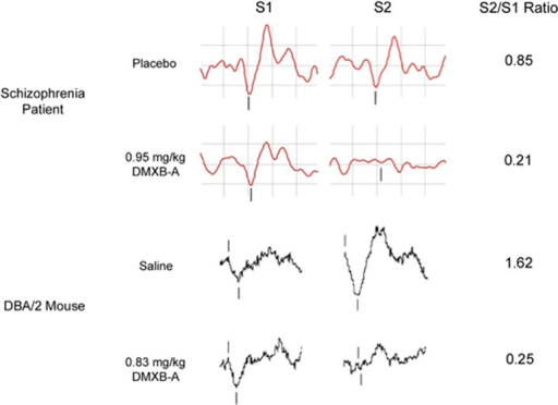 Comparison of S1 waveforms, S2 waveforms and S2/S1 ratios during placebo/saline and DMXB-A administration as measured by EEG in a schizophrenia patient (adapted from Olincy et al.25) and an implanted electrode in the CA3 subfield of the DBA/2 mouse hippocampus (adapted from Simosky et al.26). Positive polarity is downwards. Vertical hash marks denote the P50 in the patient and the P20–N40 in the mouse. Similar improvements on sensory gating were observed after DMXB-A treatment in both patients and mice. DMXB-A, 3-2,4 dimethoxybenzylidene anabaseine; EEG, electroencephalography.