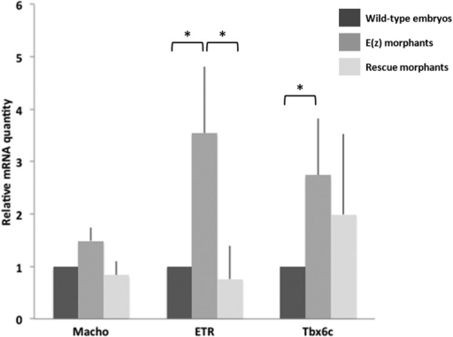 . mRNA expression of tissue-specific genes in wild-type embryos, Ci-E(z) and Rescue morphants.Macho1, Tbx6c and ETR mRNA expression at 16-cell stage in wild-type embryos (dark grey), Ci-E(z) morphants (intermediate grey) and Rescue embryos (light grey). The histograms are the mean of two (Macho1) or three (Tbx6c and ETR) independent micro-injection experiments; data were normalized to respective S26 mRNA expression values. A relative mRNA quantity value of one corresponds to the amount of wild type target mRNA. P-values (*P<0.05) were calculated using the Wilcoxon rank sum test. Error bars correspond to the standard deviation from three independent experiments.