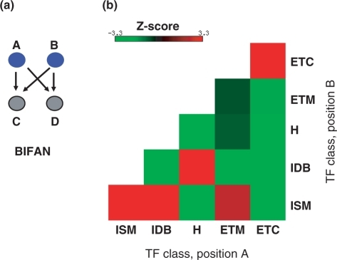 Statistical significance of combination of sensing classes in bifan motifs observed in the transcriptional network of E. coli. (a) In a bifan motif, two TFs A and B, both regulate the expression of two different target genes C and D. Thus making the positions of the TFs to be symmetric, unlike in FFLs. (b) Matrix shows statistical significance for occurrence of different sensing category combinations in bifans using the z-scores calculated by comparing against 1000 sets of randomly generated bifans as described in Materials and Methods section. Notice that since the positions of the TFs are not relevant only a lower-triangular matrix is shown. Positive z-scores correspond to favored combinations of sensing classes in bifan motifs and vice versa. /z-scores/ >3.3 were considered significant as they corresponded to P-values <0.001, unless otherwise stated.