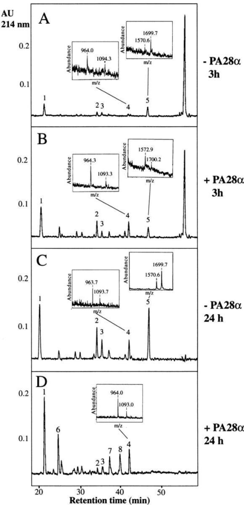 PA28α enhances the rate of accumulation of dual cleavage  products without changing the cleavage site specificity of the proteasome.  The substrate OvaY249-269 (for the sequence, see Fig. 5 A) was incubated  with 20S proteasomes from EL4 cells in the absence (A and C) or presence (B and D) of recombinant PA28α. At the time points indicated, the  mixtures were separated by reverse phase HPLC. The peptides in the  peaks marked with numbers are: TEWTS (1), YVSGLEQLE (2), YVSGLEQL (3), ESIINFEKL and the Kb ligand SIINFEKL (4), SIINFEKLTEWTS and ESIINFEKLTEWTS (5), YVSGLE (6), SIINFE (7), and  SIINF (8). The large peak at the right of A and B is undigested substrate.  Peptides were identified by MALDI-Tof-MS and Edman degradation.