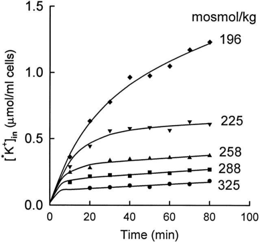 Effect of cell volume on the rate of inactivation of KCC at 25°C. Cells were preincubated in hyposmotic (200 mosmol/kg) medium for 15 min at 37°C to activate KCC and were pelleted and maintained at 37°C before resuspending at 25°C in 86Rb-containing media of the indicated osmolality. All flux mediate contained 5 mM KCl and 10−4 M ouabain. The solid curves through the data represent single exponential decreases in the flux (), with initial flux equal to the initial slope of the curve in 196 mosmol/kg medium. The lag times for the individual curves (from the top) are 17.5, 11.3, 6.0, 3.7, and 1.8 min.