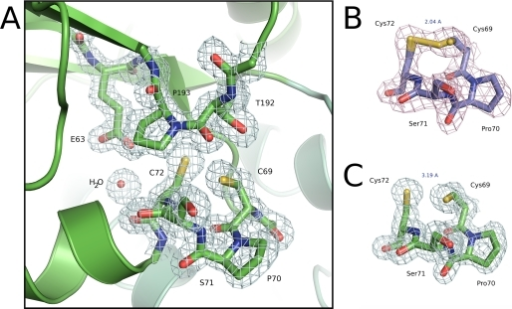 Active site region of BdbD. A, detailed view of the N terminus of helix α1 of sBdbD showing the Cys-Pro-Ser-Cys active site of sBdbD and the closely lying cis-proline (Pro193), which is invariant in all thioredoxin-like proteins. B and C, electron density (contoured at 1.0σ) of the active site region of sBdbD in oxidized and reduced states, respectively.