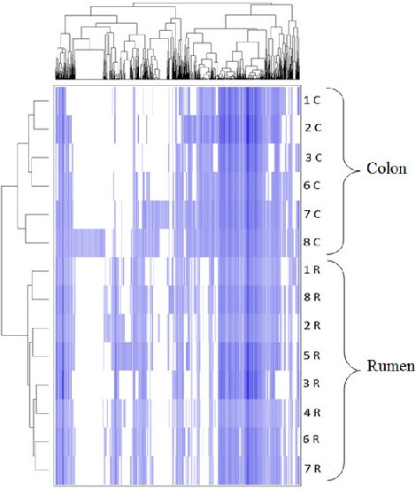 Distribution of PhyloChip OTU's for all 14 samples. Samples (rumen and colon) are arranged in rows and are clustered on the vertical axis (y-axis). OTU's are arranged vertically and are on the horizontal axis (x-axis). Clustering was done for each using Phylotrac's heatmap option with Pearson correlations and complete linkage algorithms.