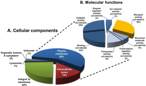 "Classification of identified sialoglycoproteins by GO annotation.(A) Cellular components were assigned using Ingenuity Pathway Analysis Knowledge Base (http://ingenuity.com/), the Human Protein Reference Database (http://www.hprd.org/), and the Gene Ontology (GO) Consortium (http://geneontology.org/). (B) Molecular functions were assigned using the PANTHER classification system (http://www.pantherdb.org/). Of the 843 unique sialoglycoproteins confidently identified from the ten samples, 485 (58%) and 121 (14%) proteins could be assigned to the ""plasma membrane"" (GO:0005886) and ""extracellular space"" (GO:0005615) GO categories, respectively. A total of 819 molecular function hits were allotted to the 606 cell surface proteins. Of these, approximately one-third (34%) correspond to receptor activity including all major classes of cell surface receptor proteins."