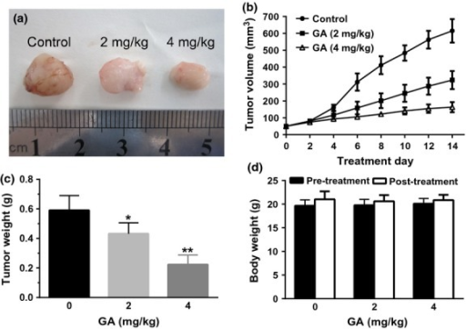 Gambogic acid (GA) inhibited tumor growth in a xenograft mouse model. The BALB/c nude mice were injected with U266 cells for some days followed by treatment with solvent or various doses of GA for 14 days. Then, the mice were killed, tumor removed and photographed (a). In addition, the tumor size (b), weight (c) and body weight (d) were measured. Bars are shown as mean ± SD (n = 6). The comparisons were made relative to untreated controls, and the different levels of significance were indicated as *P < 0.05 and **P < 0.01.