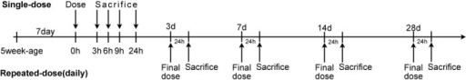Time lines summarizing the procedures used for in vivo studies of single- and repeated-dose toxicity. For the repeated-dose studies, only the final dose is shown.
