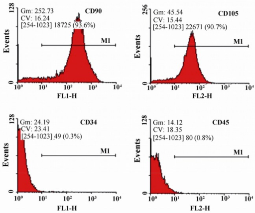 Flow cytometry analysis of human Wharton's Jelly-Mesenchymal Stem Cells (WJ-MSCs) for surface markers. The cells were positive for CD90 and CD105, but roughly negative for CD34 and CD45.