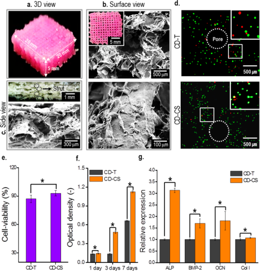 Optical and SEM images and cellular activities of the 3D cell-laden mesh structures.Optical and SEM images of 3D MC3T3-E1-laden mesh structures fabricated using CD-CS. (a) 3D view, (b) surface view, and (c) side view. (d) Fluorescence images showing the cell viability of the cell-laden mesh structures fabricated using the CD-T and CD-CS after 1 day. (e) Cell viability measured using the fluorescence images and (f) MTT assay results showing cell proliferation. (g) Relative expression of ALP, BMP-2, OCN, and Col-I gene expression levels in MC3T3-E1 cells for 14 days. In the fluorescence images, the live cells are shown in green and dead cells shown in red. Asterisks (*) indicate p < 0.05.