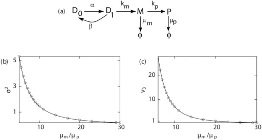 Steady state moments for proteins.(a) Kinetic scheme for the two-state random telegraph model. For this model, steady state variance (scaled by 10−5) and third central moment ν3 (scaled by 10−6) of proteins as a function of μm/μp are plotted in (b) and (c) respectively: lines represent analytic estimates and points correspond to the simulation results. Parameters are: α = 0.5, β = 0.25, km = 2, ⟨mb⟩ = 5, kp = 0.5.